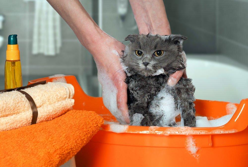 The bath time struggle