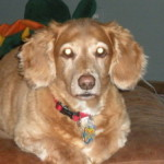 Profile photo of Dorothy Pantelides Fleming
